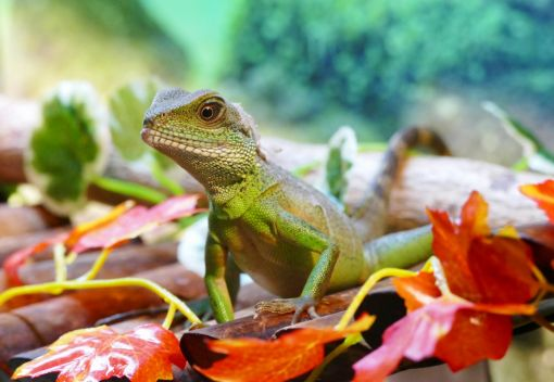 Most Reptiles kept as Exotic Pets die Within a Single Year