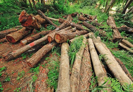 WWF: Loggers in Sarawak should Adopt sustainable Ways
