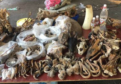 The Golden Triangle: the Wild East of Wildlife Trafficking