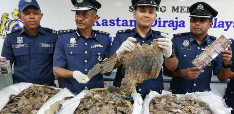 Officials at KLIA seize Pangolin Scales sent in the Mail