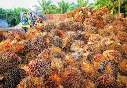 An EU ban on Malaysian Palm Oil Products may well be Necessary