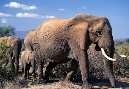 A large Haul of Ivory on its Way to Malaysia is Seized in Harare