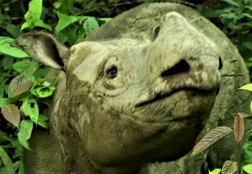 Iman the Rhino is gravelly Ill