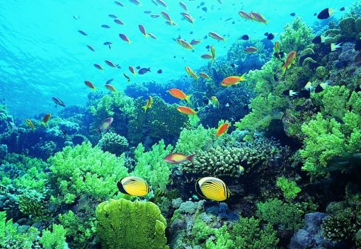 Scientists are Growing Hardy new Corals in the Lab