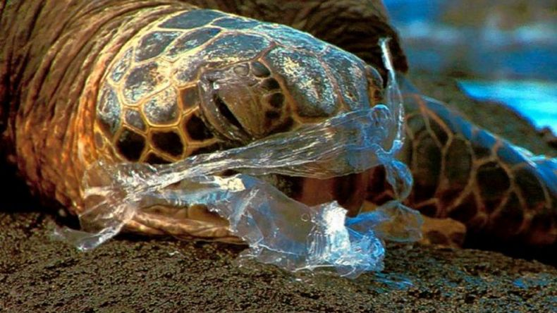 Plastic Waste is a Threat to Sea Turtles
