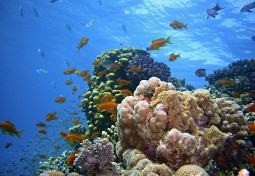 Wan Junaidi: Let's protect our Marine Environment with better Laws