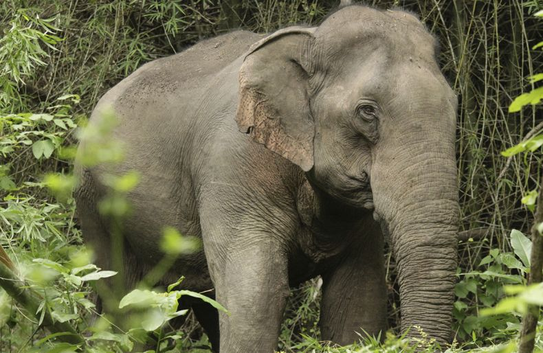 SAM: Stop the Wanton Deaths of Wild Elephants