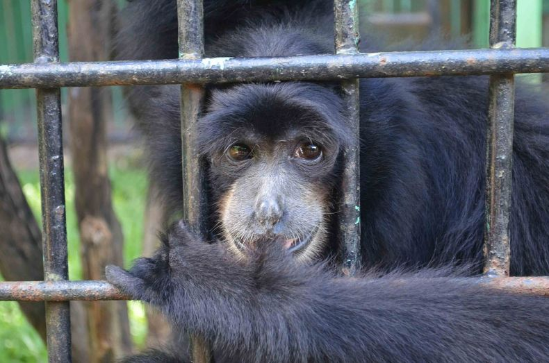 Nothing wrong at Kemaman Zoo? Nonsense, say Animal Rights Activists