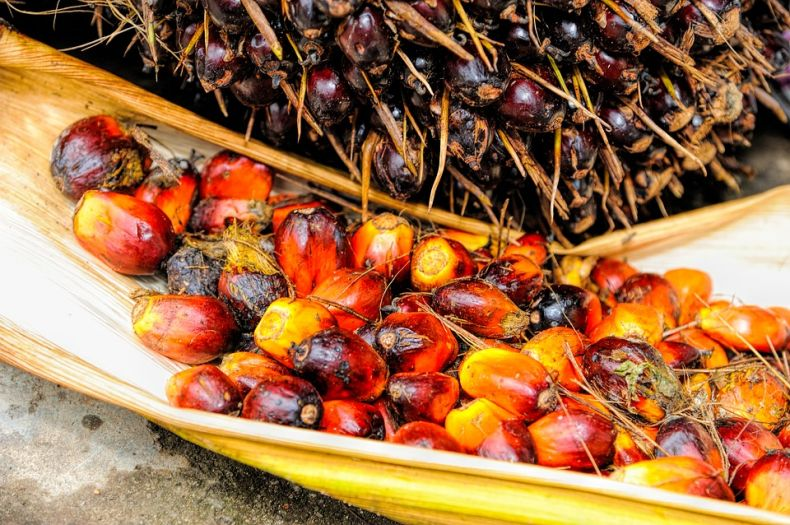 Malaysia decries EU ban on Palm Oil as unacceptable 'Crop Apartheid'