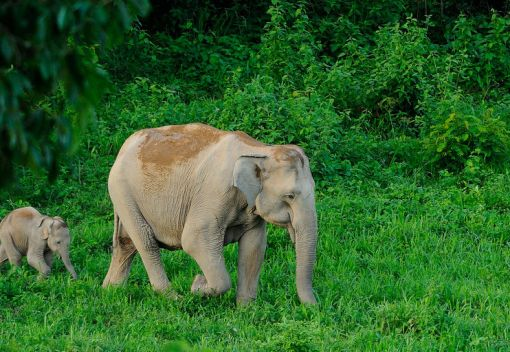 Living in Harmony with Wild Elephants