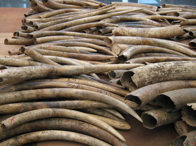 Hong Kong will ban the Trade in Ivory