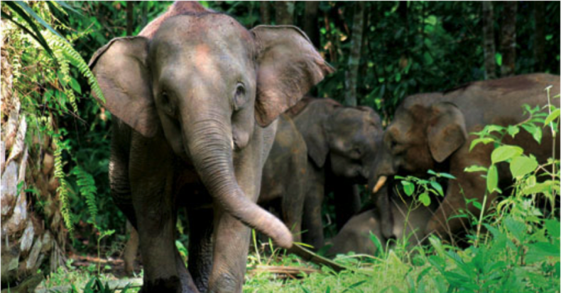 Human-Elephant Conflicts continue to Persist, but We shouldn't Despair
