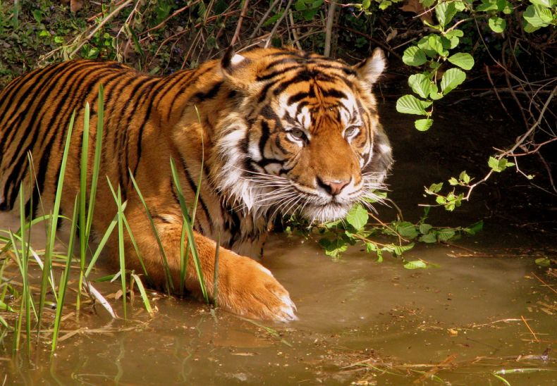 Most Tiger Reserves in Southeast Asia are Below Par. This must Change